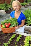 Lady vegetable gardener Stock Photography