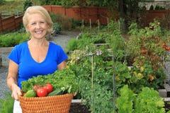 Lady vegetable gardener Stock Images