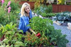 Lady vegetable gardener Stock Image