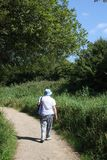 Lady walking on footpath at nature reserve. Lady walking away from camera on a footpath at Leighton Moss R.S.P.B. nature reserve at Silverdale, Lancashire royalty free stock photos