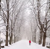 Lady walking in a snow covered boulevard. With red parka, snow falling royalty free stock photo