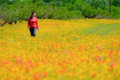 Lady walking Spring flowers carpet Texas Austin peach tree. Spring flowers carpet in Texas Austin colorful blooming blossom farm travel lady walking stock photo