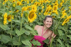 Lady walking in sunflower field Stock Photography