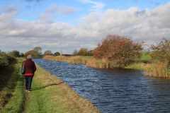 Lady walking on towpath on canal bank in autumn. Lady walking on the footpath at the side of the Lancaster canal near Winmarleigh in Lancashire, UK on a breezy stock image