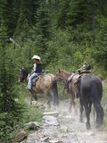 Lady Wrangler. This image of the lady wrangler and the three horses was taken on a trail in Glacier National Park Stock Photo