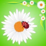 Ladybag op kamille vector illustratie
