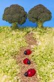 Ladybeetle-Tomaten Stockfotos