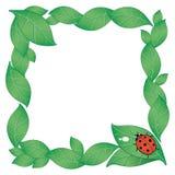 ladybird предпосылки Стоковое Изображение