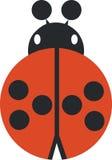 ladybird 02 Стоковое Изображение