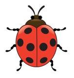 Ladybird. One Ladybird,  top view, illustration Stock Photos