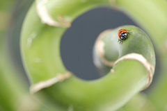 Ladybird Stock Images