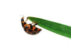 Ladybird Stock Photos