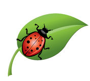 Ladybird. On a green leaf isolated on white Royalty Free Stock Photography