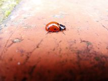 ladybird fotos de stock