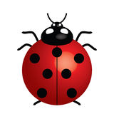 Ladybird. Vector illustration of ladybird (symbol of good luck Royalty Free Stock Images