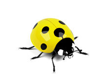 Ladybird. Royalty Free Stock Images