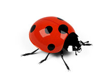 Ladybird. Ladybird on a white background Stock Photo