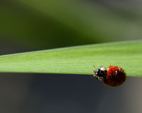 Ladybird Stock Photos