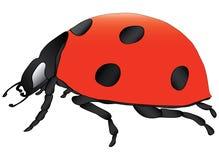 Ladybird. Over white  illustration Royalty Free Stock Image