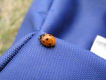Ladybird 1 Image libre de droits