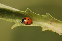 Ladybird Photos stock