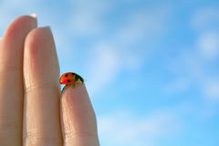 Free Ladybird Stock Photo - 3619600