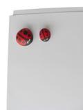 Ladybird Fotografia Stock Libera da Diritti