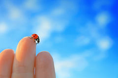 Ladybird. On a woman's fingers royalty free stock images