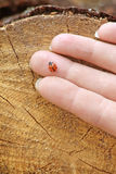Ladybird Stock Photography