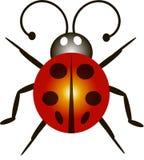 ladybird Stockbilder