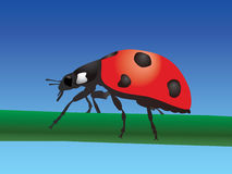 Ladybird.  Stock Photo