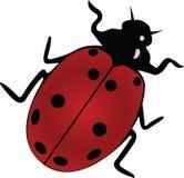 Ladybird. Isolation on a white background Stock Image
