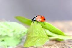 ladybird Fotos de Stock