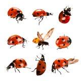 ladybird Imagen de archivo