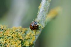 ladybird Stockfotografie