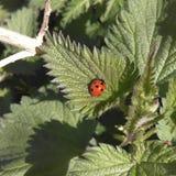 ladybird Fotos de archivo