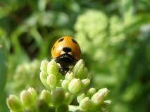 ladybird Imagenes de archivo