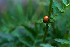 ladybird stockfoto