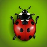 ladybird Ilustração Stock