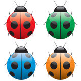 Ladybird. Illustration. For your design Stock Image