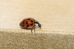 ladybird Immagini Stock Libere da Diritti