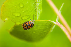 ladybird fotos de stock royalty free