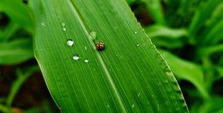 ladybird lizenzfreie stockfotos
