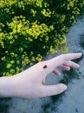 ladybird imagen de archivo libre de regalías