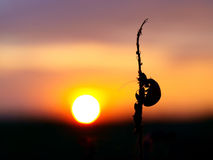 Free Ladybird Against The Coming Sun Stock Photo - 20534240