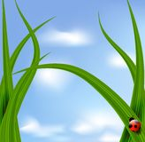ladybird błękitny niebo ilustracji