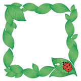 Ladybird background. Decorative board made with green leaves, drops of dew and a ladybird Stock Image