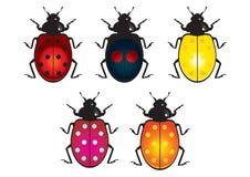 Ladybird beetle Stock Photos