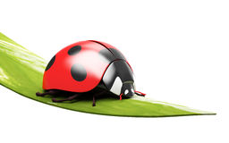 Ladybird on a blade of grass. Stock Photo