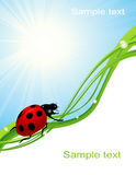 Ladybird on blue sky Royalty Free Stock Photo